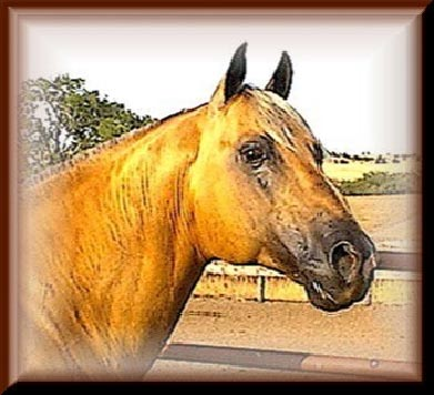 Klein Quarter Horses - Sire: Goldies Bill